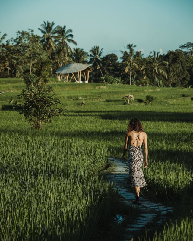 Treat yourself to a perfect morning walk over endless green fields 🍃 A wonderful place to clear your thoughts and get away from the hustle. Let's get into natural Balinese life. #kclububud . For the best guarantee rate, please book by clicking the link in our bio.